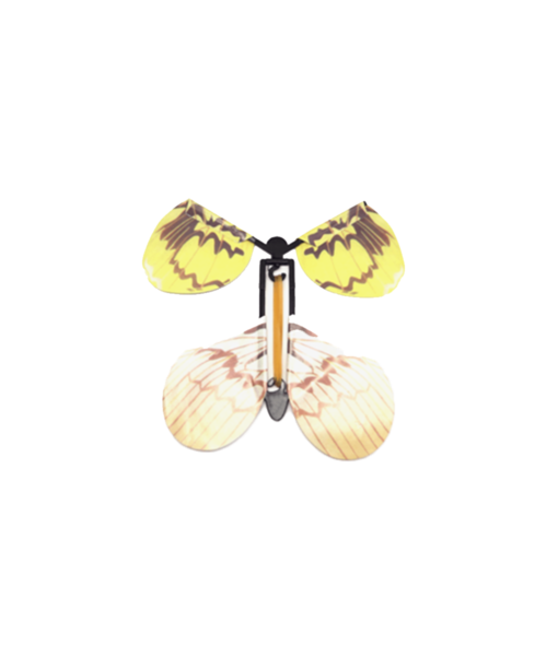magic butterfly, Magic Butterfly
