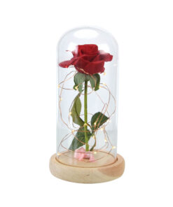 Người đẹp và quái vật-Red-Rose-in-a-Glass-Dome-on-a-Wood-Base-for-Valentine-7