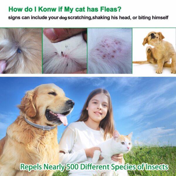 Dewel Dog Collar Anti Flea Mosquitoes Ticks Insect Waterproof Herbal Pet Collar 8 Months Protection Dog 1
