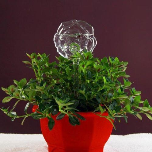 Self-Watering Plant Glass Bulbs, Self-Watering Plant Glass Bulbs