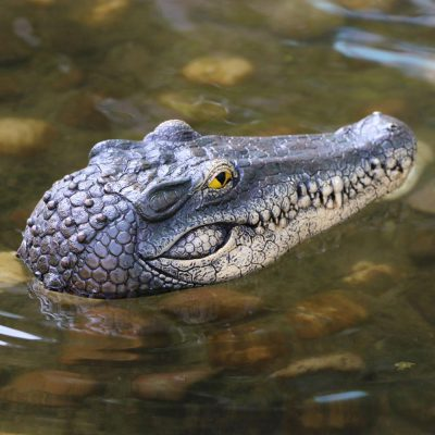 Floating Crocodile Head, Floating Crocodile Head