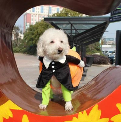 Dog Pumpkin Halloween Costume, Dog Pumpkin Halloween Costume